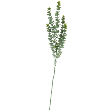 Eucalyptus Vert Blanchi